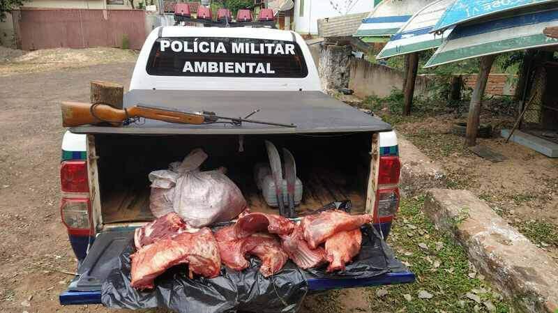 Caçadores carregavam 42 kg de carne de cateto