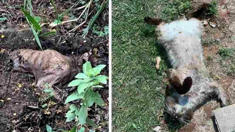 Animais não resistiram e morreram no local