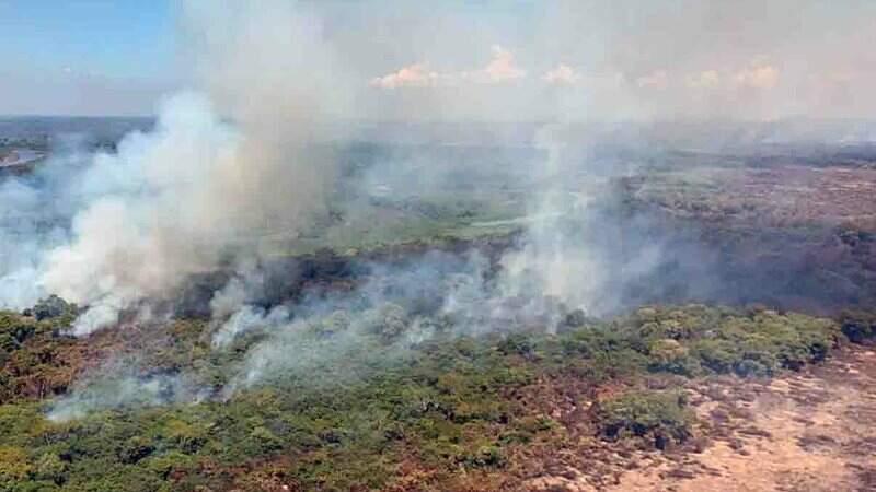 Pantanal teve desastre ambiental no ano passado