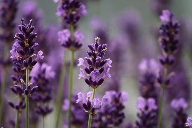 10 dicas infalíveis para deixar sua casa cheirosa
