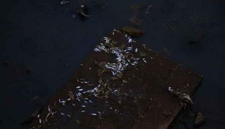 Mistério: água muda de cor e peixes aparecem mortos em córrego na Ernesto Geisel