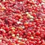 VÍDEO: Milhares de tomates e laranjas são descartados em terreno do Nova Lima