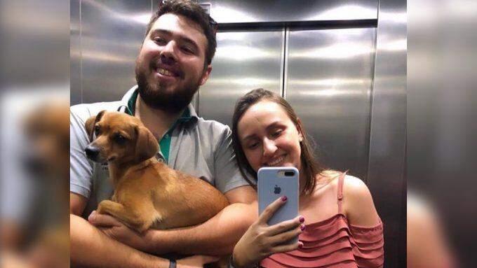 Recomeço: cães e gatos resgatados por ONGs são adotados na pandemia