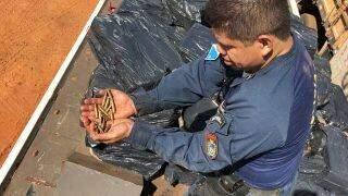 Caminhoneiro preso com 3,9 ton de maconha tinha arma, munições de fuzil e R$ 10 mil