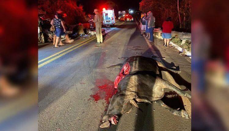 Motorista atropela três vacas e mulher e filha são levadas para a Santa Casa