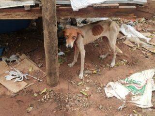 Mulher é presa e multada por maus-tratos contra seis cachorros