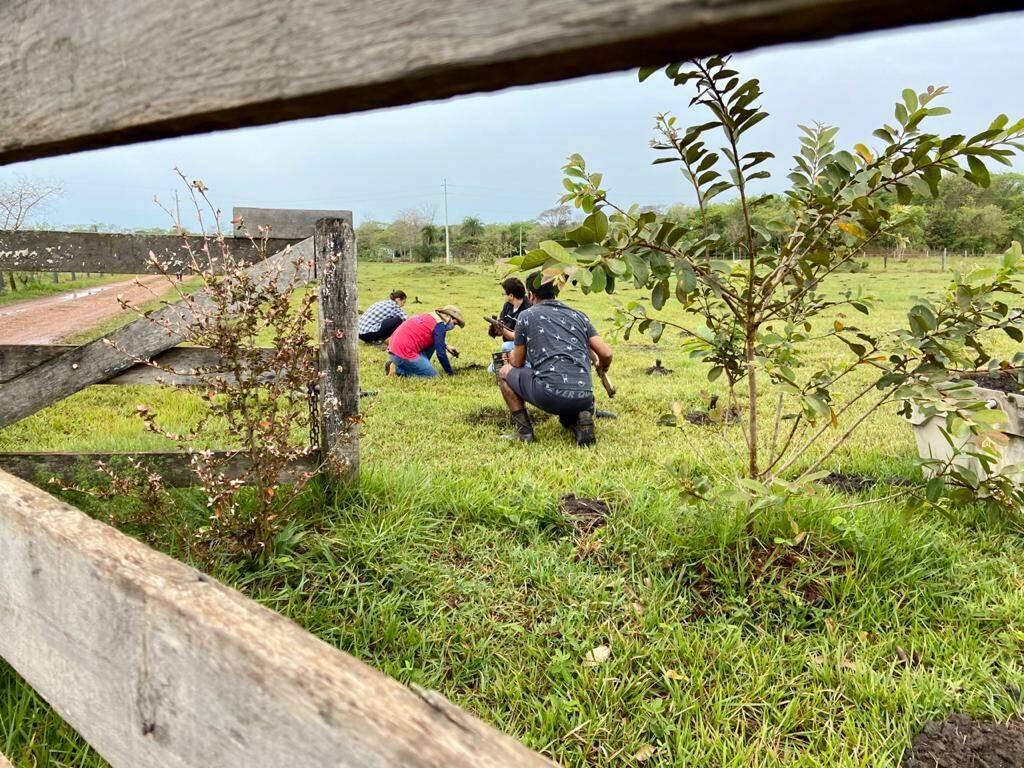No dia da árvore, ação ambiental independente dá início a plantação de 1000 mudas em Bonito