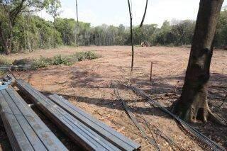 Com impasse na Justiça, desmatamento é retomado no Parque dos Poderes