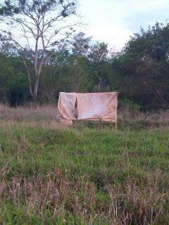 Para construir barracos, invasores desmatam reserva ambiental em Ponta Porã