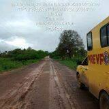Aos poucos, verde e 'vida' no Pantanal retornam com chegada de chuvas
