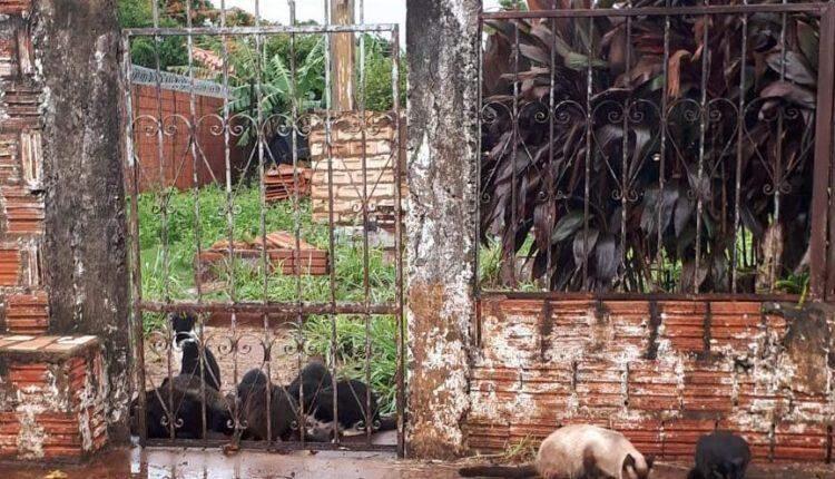 Sumiço de 10 gatos revolta vizinhança na Vila Sobrinho, em Campo Grande